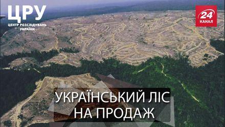Украденный лес: ради кого и чего беспощадно рубят карпатские леса