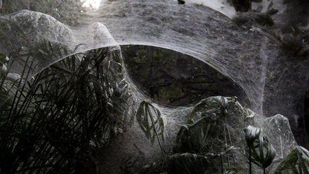 Пауки окутали паутиной лес в Израиле: устрашающие фото