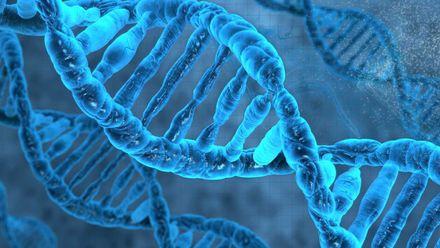 Ученые открыли ген, отвечающий за долголетие