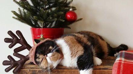 Как уберечь новогоднюю елку от домашних любимцев: забавные фотопримеры