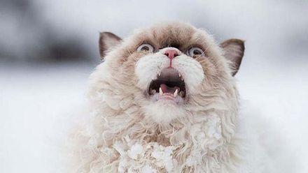 Реакція тварин на сніг: фантастичні емоції у фото