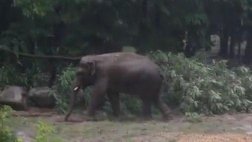 Как звери в столичном зоопарке радовались ливню: необычное видео