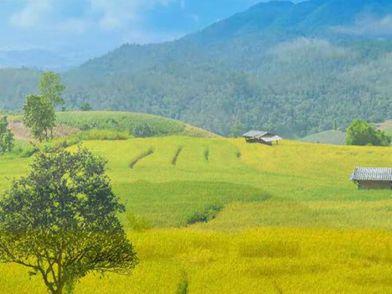 Чудеса мира: Экскурсия на рисовые поля Таиланда