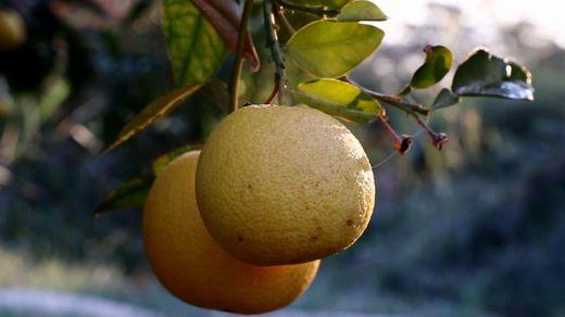 Як в Ізраїлі навчилися вирощувати рослини на піску і камінні