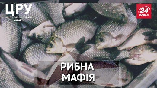 Как чиновники, правоохранители и экологи прикрывают рыбную мафию, – расследование ЦРУ. Часть 2