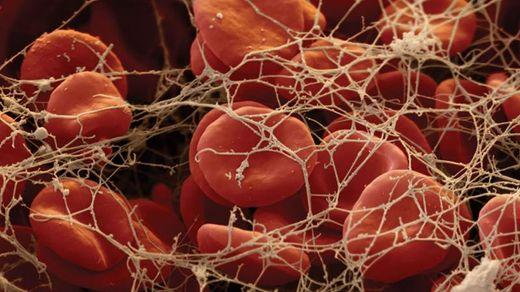 Человеческое тело под микроскопом: впечатляющие кадры