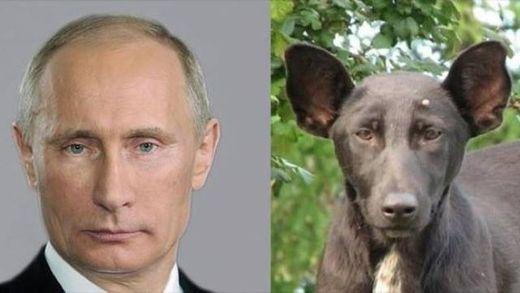 """Путин-""""собака"""": появилась забавная карикатура на главу Кремля"""