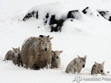 Такого снігу у Великобританії не чекали