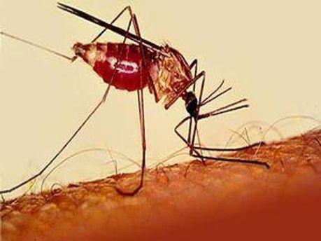 У Кременчуці чоловік захворів на тропічну малярію