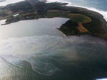 Нафтова пляма добралась до берегів