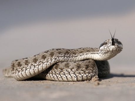 Після укусу змії дівчинка потрапила в лікарню