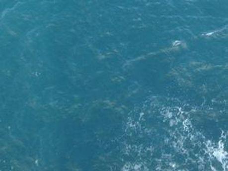 Жінку шукають у морі і на прибережній смузі