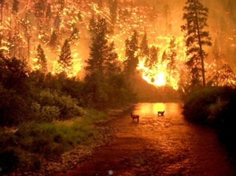 Абхазія і Південна Осетія готова допомгти у боротьбі з лісовими пожежами