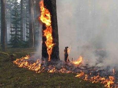 Лісова пожежа загрожує хімічним підприємствам