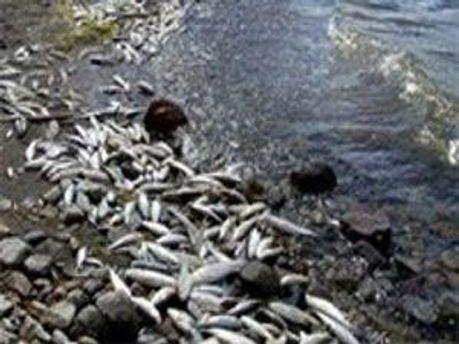 В Дніпрі гине риба