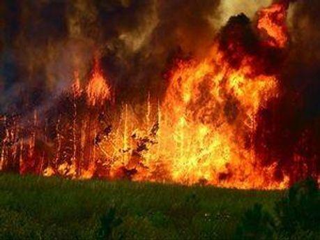 Дніпропетровські ліси підпалюють навмисно