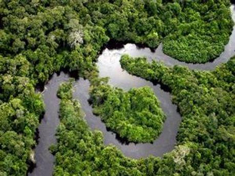 Амазонські ліси