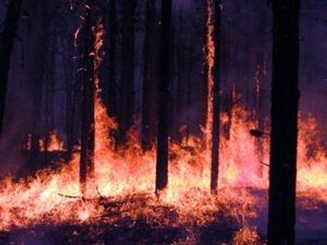 У Грузії знову горить ліс