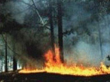 Загоряння торфу може призвести до лісової пожежі