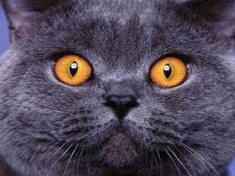 Чоловік замаринував кота, мотивуючи це його поганим характером