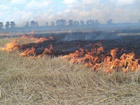 Через займання трави згоріли 4 будинки