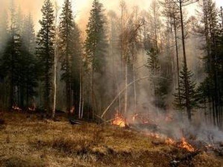 У Росії тривають лісові пожежі