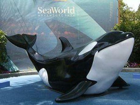 SeaWorld займається дресируванням китів