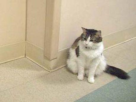 Кіт Оскар