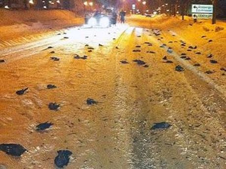 Мертві птахи засипали шведські вулиці