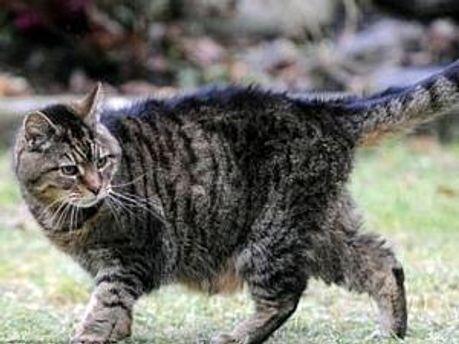 Найстарішій кішці — 39 років