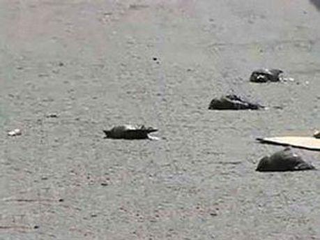 У Туреччині зафіксована нова масова загибель птахів