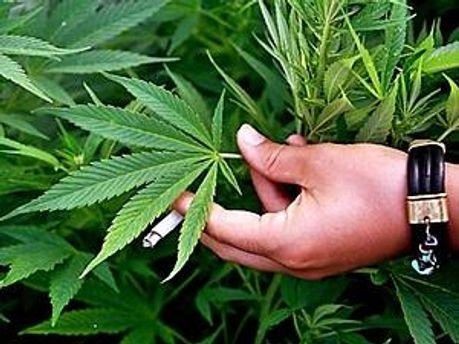 У зловмисника вилучили більше двох кілограмів марихуани