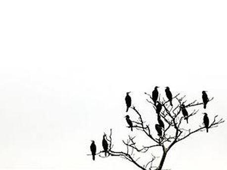 Серед виявлених птахів є як качки і сороки, так і чорні дрозди