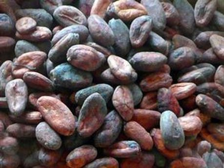 Какао-бобы больше всех поставляет Кот-д'Ивуар