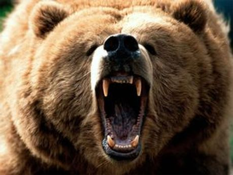 Медведь вырвался на волю