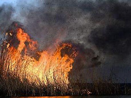 Пожежа може перекинутись на лісовий масив