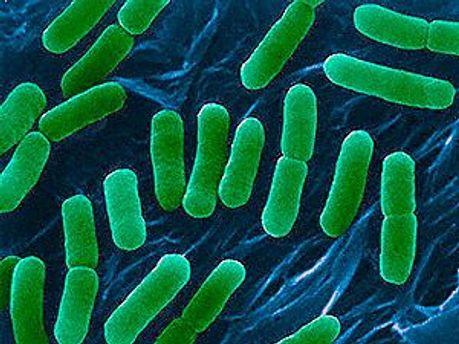 У Польщі виявили перший випадок на зараження бактерією E.coli