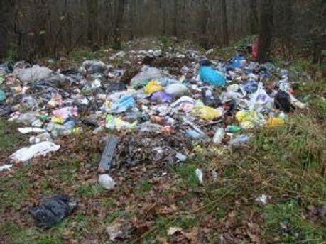 За мусор в лесу будут платить штраф