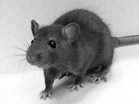 Пацюки зірвали виліт літака