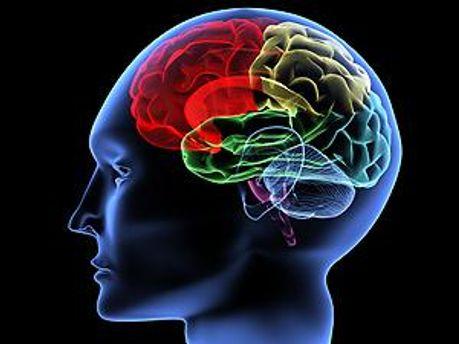 Ученые исследовали мозг