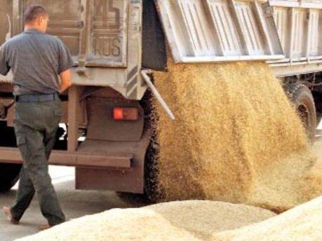 Египет не против украинского зерна