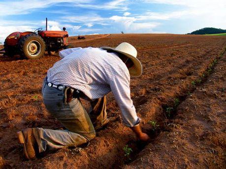 Українські аграрії більше позичають