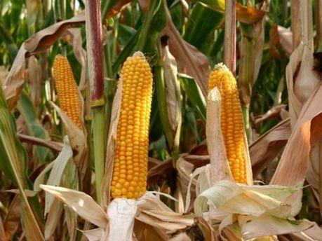 Украина ожидает рекордного урожая