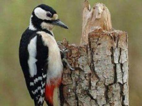 Згідно з законом пташок не можна тримати в неволі