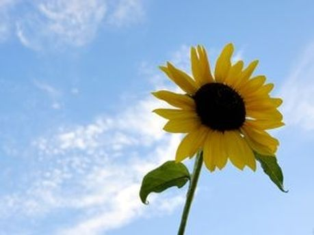 В субботу будет сухо и солнечно
