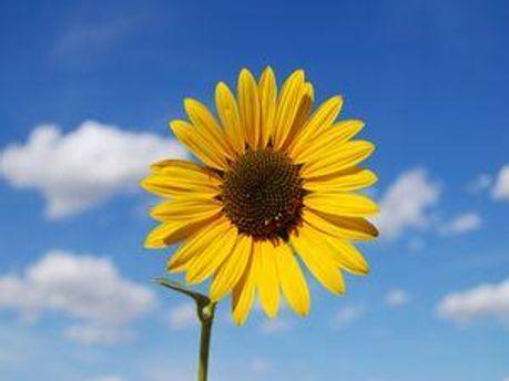 В воскресенье обещают сухую и солнечную погоду