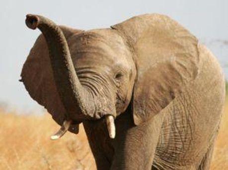 Слонов всех посчитают