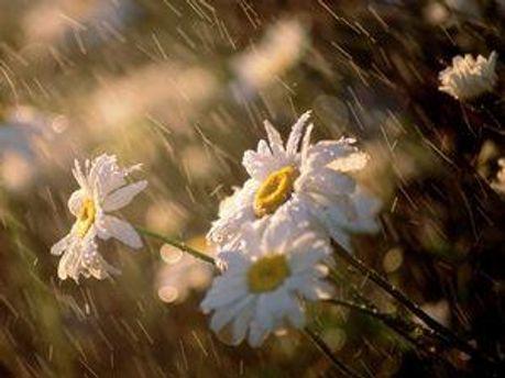 В воскресенье в некоторых регионах страны пройдут дожди