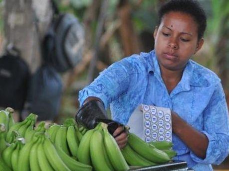 Эквадор решил держать цену на бананы
