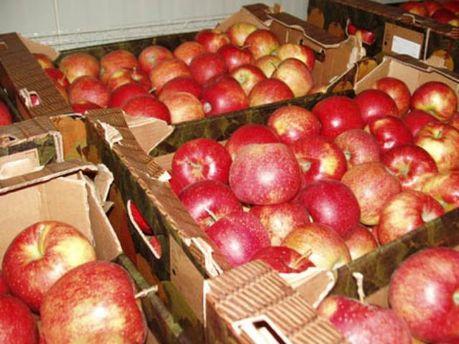 Ціни на яблука пішли вгору